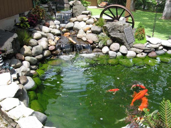 Lonnie dixie harris pond for Backyard pond depth